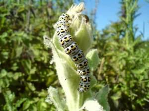Caterpillar Photograph by Rachel Remnant