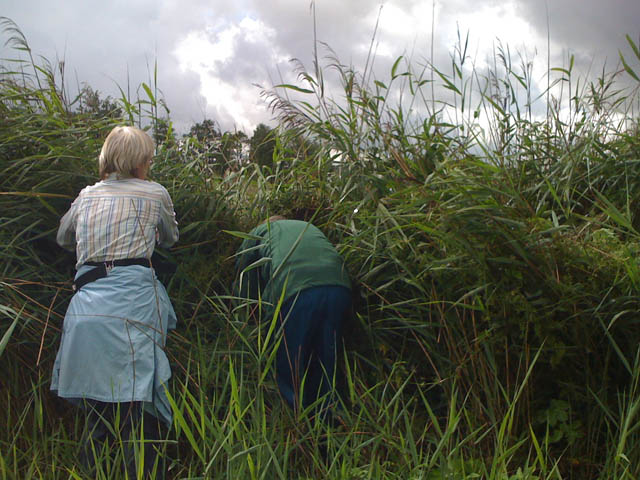 Work party volunteers cutting back the reeds to get to the wire fence