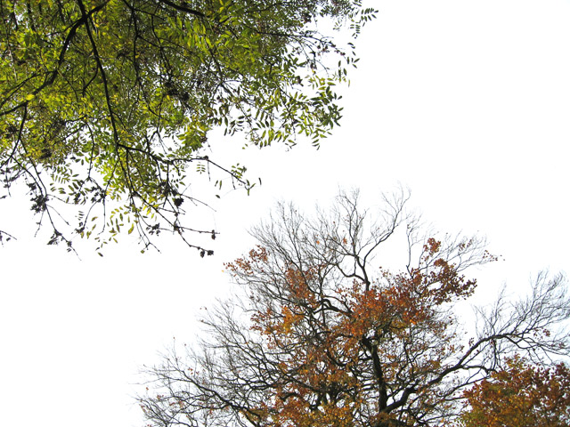 Autumn walk: deciduous trees