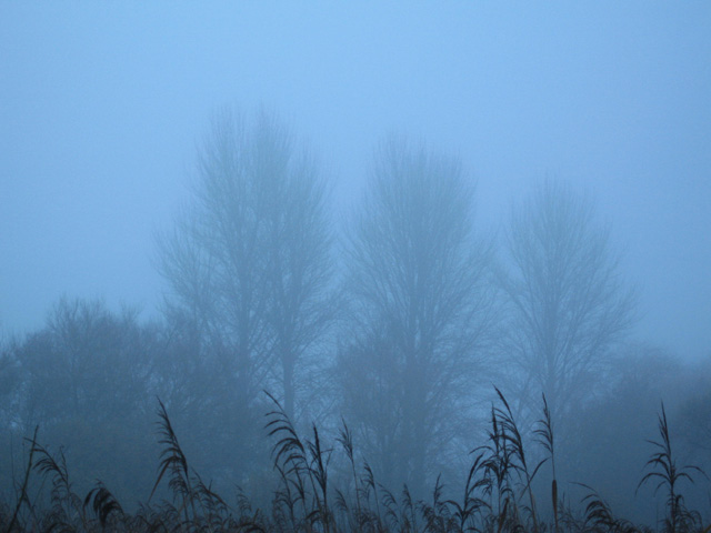 mist dawns over winnall moors