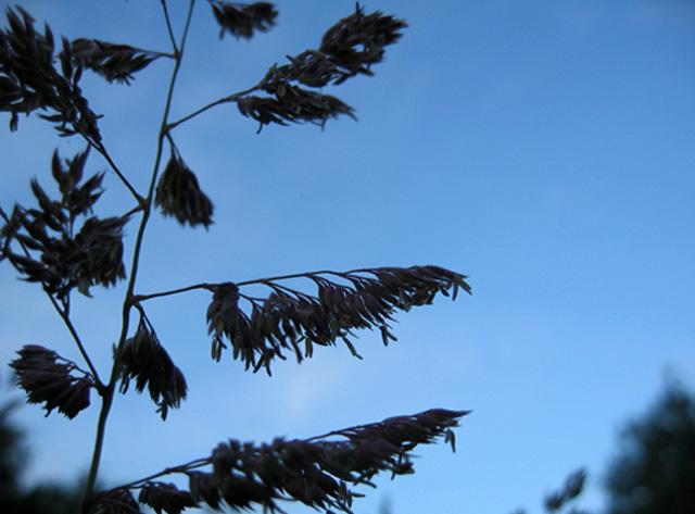 summer solstice: sebastiane hegarty