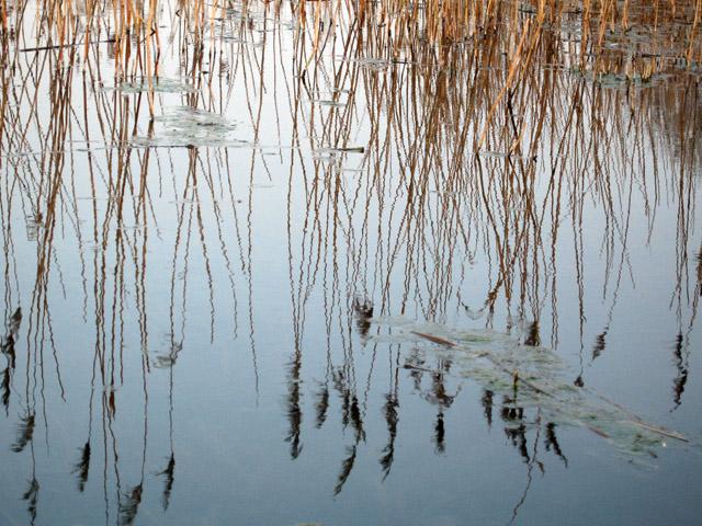 spring reflected: winnall moors soundwalk
