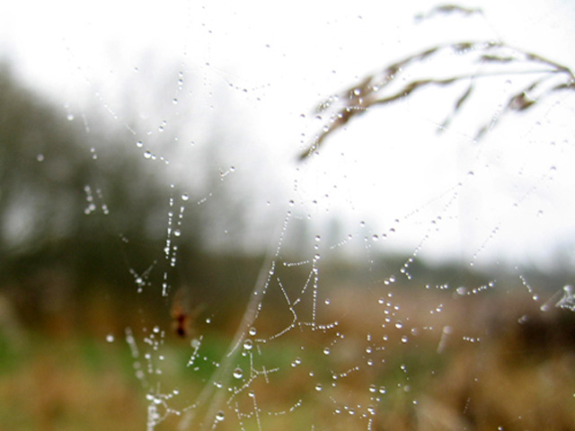 autumn dew
